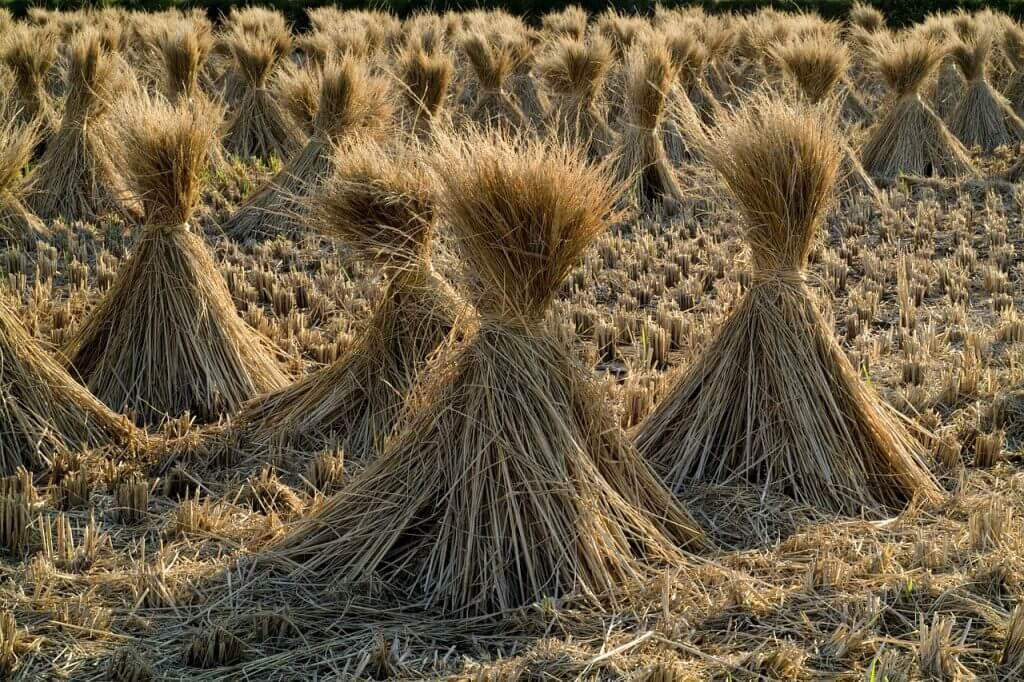 農地を相続するときに気をつけるべき4つのこと